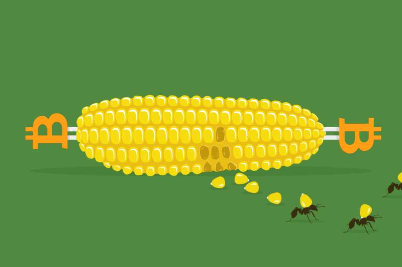 A corn cob with Bitcoin-shaped skewers with a couple kernels off and a few ants taking some away.