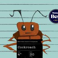 Mugshot Of A Large Cockroach
