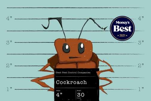 Best Pest Control Companies of 2021